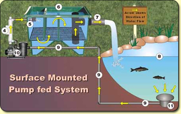 Water filtration system diagram water get free image for Pond filter setup diagram